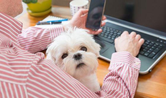 Perché portare il cane in ufficio fa bene