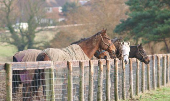 Bolla e DCPM anche per i cavalli