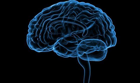 Quanta energia sprigiona il cervello?