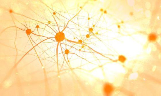 I neuroni si rigenerano