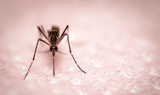 Giugno - Prime zanzare e punture di insetti: la soluzione