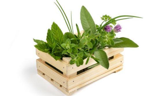 Le erbe e le preparazioni particolari