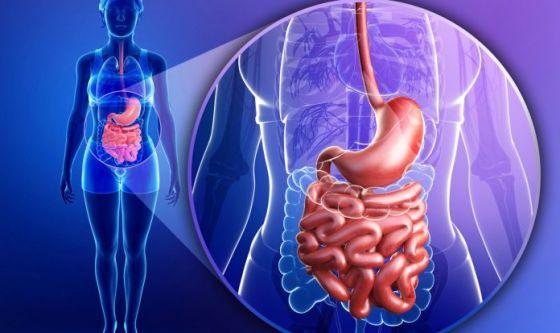 Che cos'è l'asse intestino-cervello?