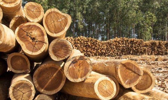 L'uso del legno