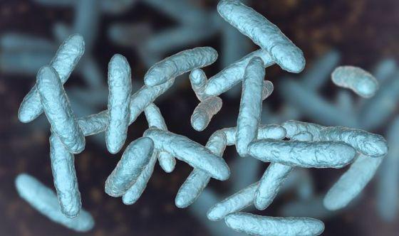 La corretta alimentazione rinforza il sistema immunitario