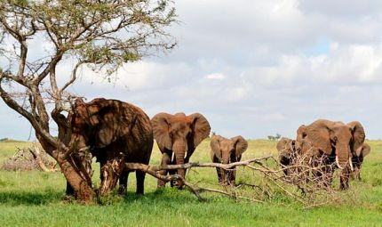 Toro - Spiagge e safari in Kenya
