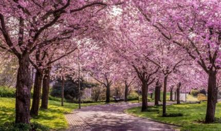 Bella la primavera, ma attenzione alle gite fuori porta!