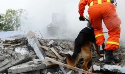 Cani, eroi silenziosi del terremoto