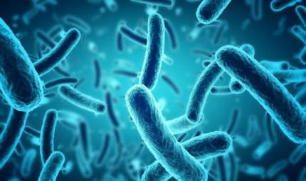 I batteri cambiano forma per resistere agli antibiotici