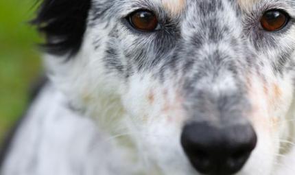 I cinque sensi del cane