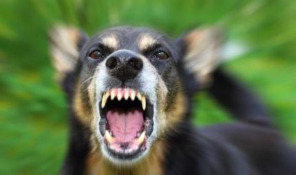 Aggressività tra cani? Ecco da cosa dipende