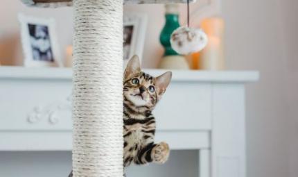 Cosa fare se il gatto gioca di notte