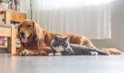Campagna per i pet: Il fumo uccide anche loro