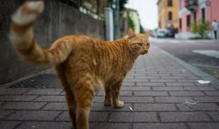 La ricerca: i gatti sanno riconoscere il loro nome