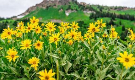 Arnica e artiglio del diavolo: curare i dolori con la natura