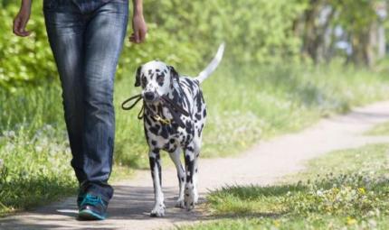 I cani? Grandi alleati nella ricerca dell'anima gemella