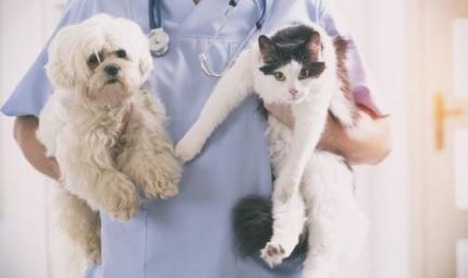 La sterilizzazione: quando serve?