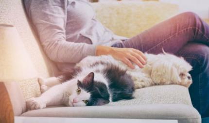Perché amiamo così tanto i nostri animali?