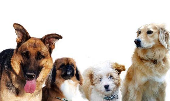 Casting per cani e gatti? Ecco come funziona
