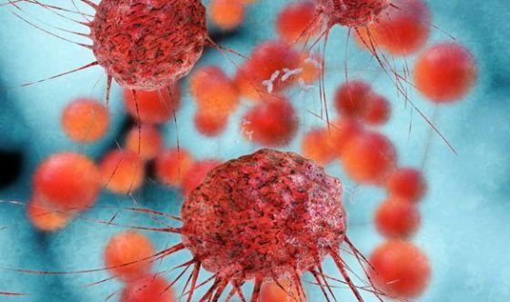 Ibernazione: una nuova terapia contro il cancro?