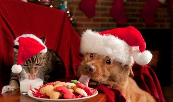 Cenone di Natale: le insidie per fido e micio