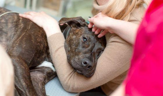 Una malattia rara, ma temibile: il tetano nel cane