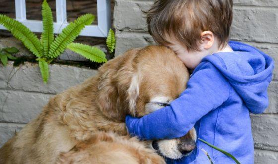 Come funziona l'assicurazione per il cane?