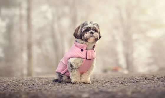 Cappottino contro il freddo al cane: si o no?