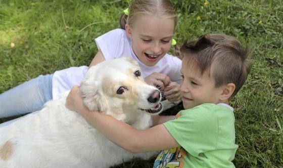 Cani e bimbi: ecco i giochi adatti da fare insieme