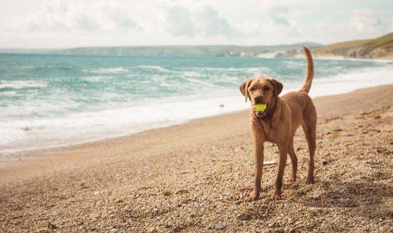 In spiaggia con il cane: le cose da sapere