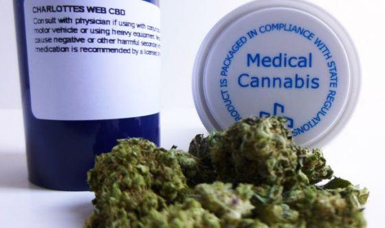 Arriva anche in Italia la cannabis per uso terapeutico