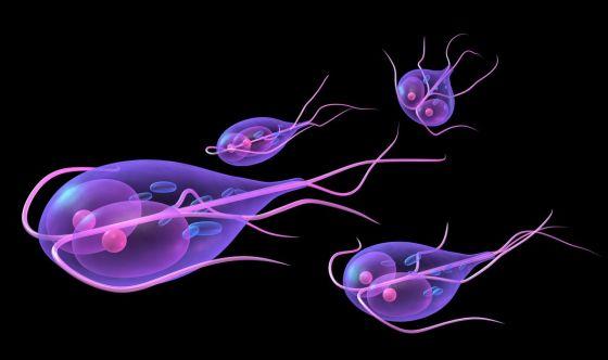 Giardia: un protozoo che colpisce animali e persone