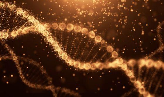 I nuovi cromosomi anti-invecchiamento