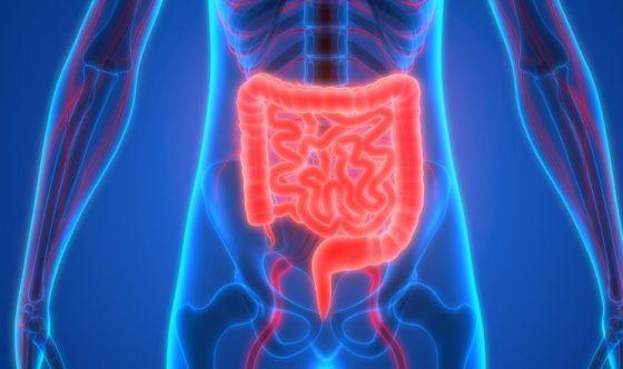 Il microbiota intestinale contro il Clostridium difficile