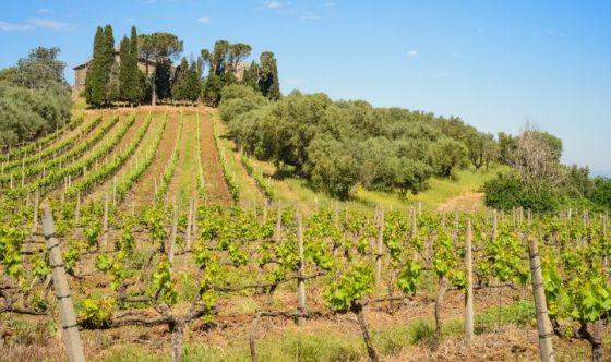 Italiani enoturisti: boom di viaggi alla scoperta del vino