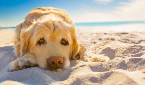 Cani in spiaggia «basta con i divieti»