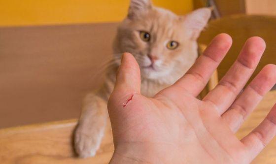 Come educare il gatto a non mordere e graffiare