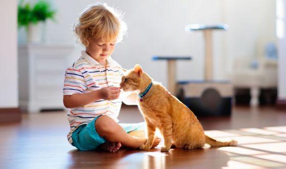 Un gatto da far crescere insieme al bambino? Ottima idea