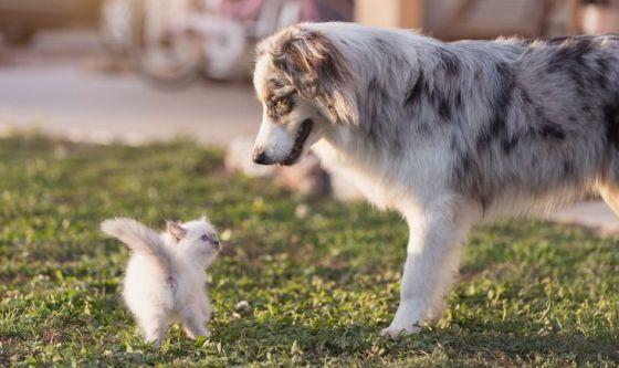 Come educare cani e gatti alla convivenza