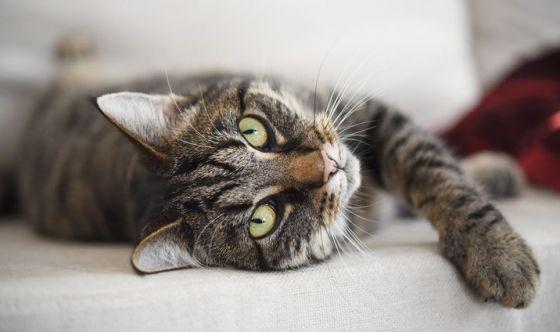Contropelo e rumori forti... danno fastidio al gatto