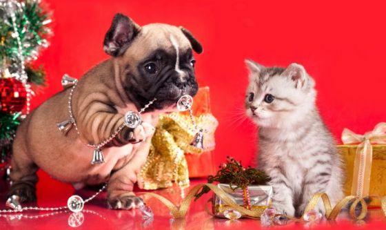 Natale per fido e micio