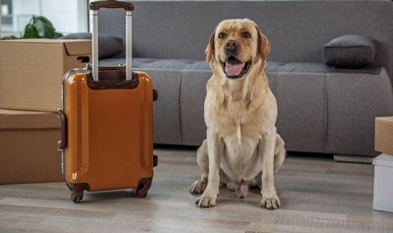 Viaggiare con i pet. Ecco il kit da portarsi dietro