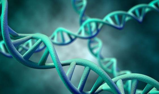 Maiali senza retrovirus per i trapianti d'organo