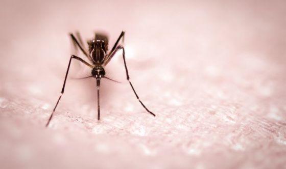 Il 20 agosto è la Giornata mondiale delle zanzare