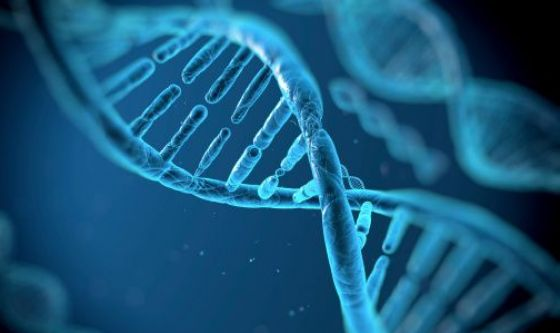 Sindrome di Duncan: scoperto nuovo bersaglio molecolare
