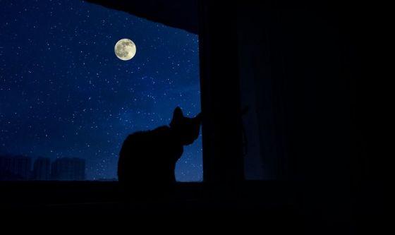 Il gatto? È un animale notturno. Ecco perché