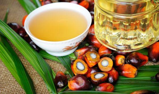Olio di palma: è davvero pericoloso?