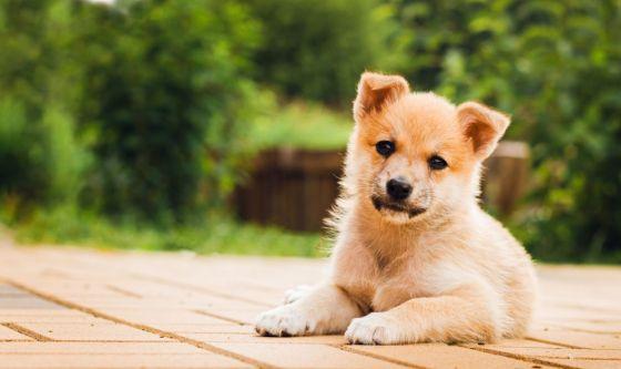 Malattie infettive del cane: la parvovirosi