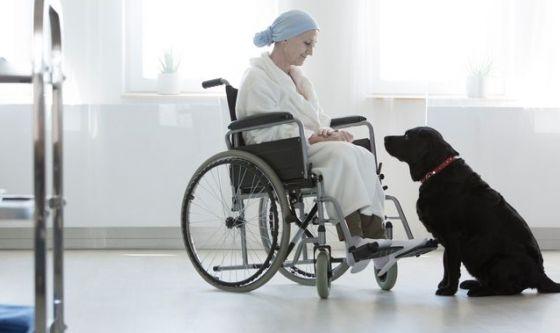 Il fiuto del cane può rilevare la presenza di un tumore