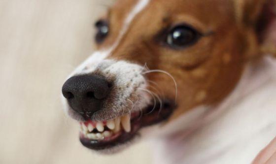 La rabbia nel cane: come evitarla